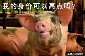20200117国内生猪、饲料