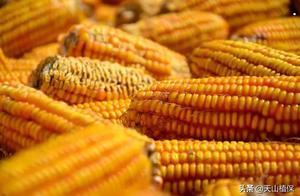 2020年,玉米、小麦和棉花